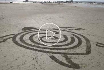 Robotteknős csodálatosan rajzol a homokba