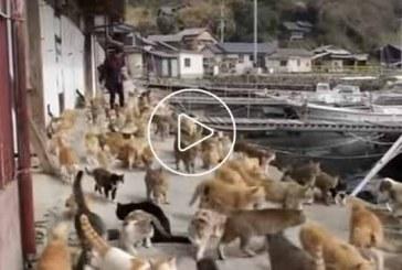 Tashirojima szigetén 120 cicával él együtt 20 ember