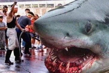 A világ legnagyobb cápája. A megalodon!