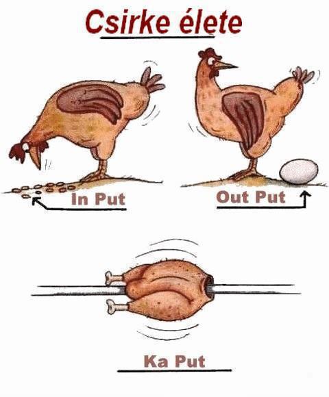 csirke-elete