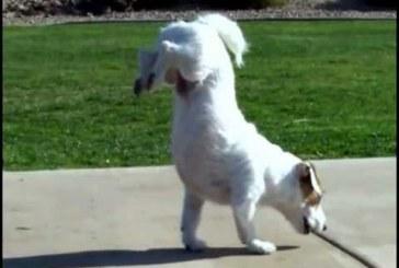 A világ legügyesebb és legokosabb kutyusa
