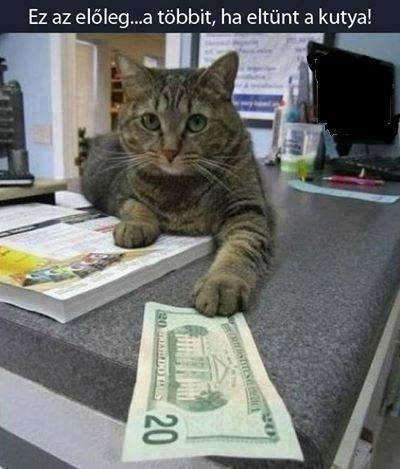 gengszter-macska