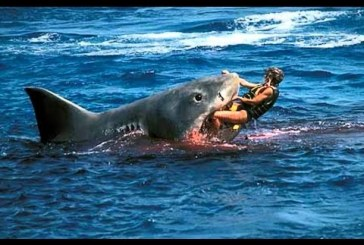 A világ 10 legveszélyesebb cápája