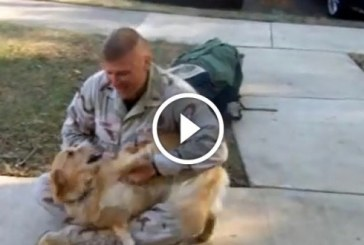 Nézd meg hogy a kutyus mennyire örül a katona gazdijának aki hazaérkezik hosszú idő után!