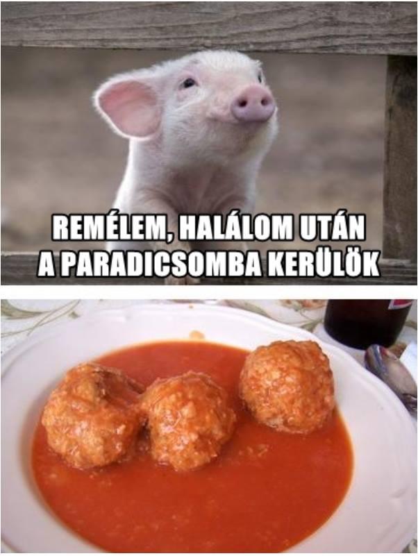 kismalac-remalma