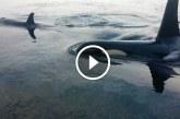 Életre szóló élményben volt részük bálnák által! Micsoda látvány!