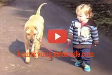 Kisfiú sétáltatja a kutyáját, majd találkoznak egy tócsával. Nézd meg mit csinálnak!
