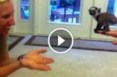 Kicsi maki első nagy ugrása! Állati aranyos! :)