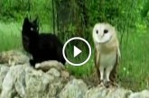 Állati cuki barátok: egy macska és egy bagoly! Gondoltad volna?