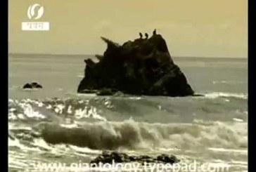 Elképesztő méretű szörnyet mosott ki a tenger cunami után az indiai partoknál