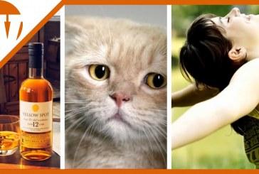Miért igyál whiskyt?