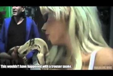 A kígyó ráharap a cicire és nem engedi