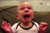Amikor a babák első alkalommal kóstolnak citromot.. szegények