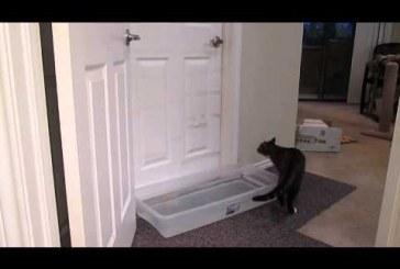 A cica aki minden ajtót kinyit – Nagyon ügyes, nézd meg!