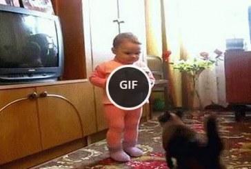 Add vissza, ez az enyém… mondta az anya cica