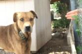 A lehető legrosszabb körülmények között tartott kutyust 3 év után végre kiszabadította egy állatvédő jóbarát…