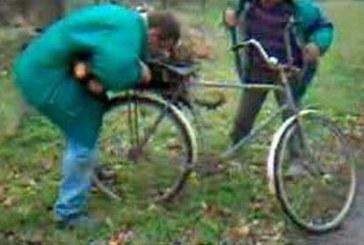 Amikor két részeg fát pakol! Hatalmas videó :D :D