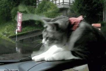 Cica vs. Ablaktörlő