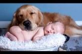 Legcukibb kutyus és baba válogatás