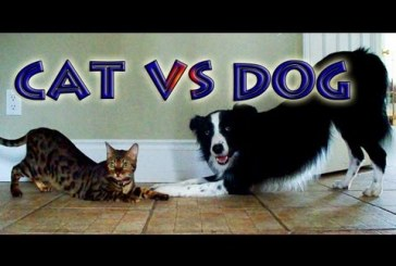 Cica VS. kutyus akrobata versenye