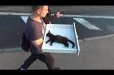 Amikor mindenki azt hitte, ez a cica meghalt, a srác adott még neki egy esélyt!