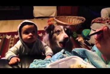 """Megkérik a babát, hogy mondja ki: """"anya"""", a kutya reakciója szenzációs!"""