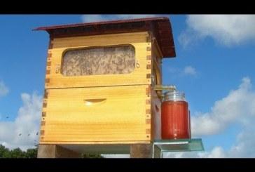 A legújabb kaptár használatával a méhek megzavarása nélkül tehetsz szert mézre!