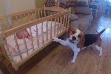 Síró kisbaba megnyugtatására a kutyus a legjobb gyógyír! A nap legaranyosabb videója!