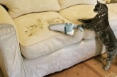 A tökéletes háziállat: főz, mos, takarít