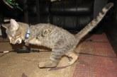 Ilyen az igazi házörző cica – Videó