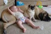 Ez a kisbaba és kiskutyája lett az internet sztárja – Videó