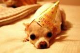 Fúú de gáz! Meg akarták lepni születésnapján, de ők lepődtek meg! – Videó