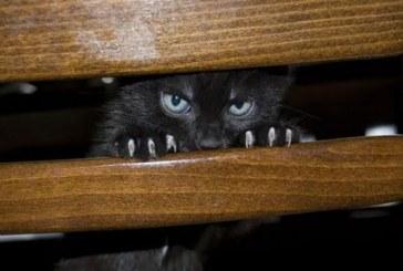 Amikor a macska bedühödik