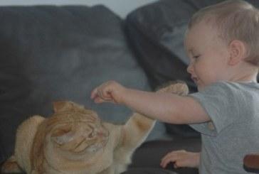 Sose szórakozz egy cicával!