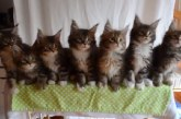Ilyen egy igazi cica Forma1