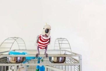 Javi, a pulóveres papagáj lett az ineternet legújabb sztárja – Képek