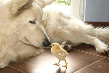 Szervezett bűnözés állat módra
