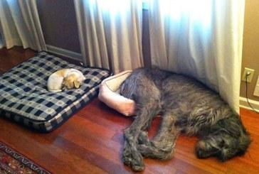 Ezek a kutyusok nincsenek tiszában a méreteikkel – Képek