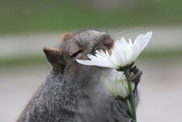 Ezek a virágokat szaglászó állatok mosolyt csalnak az arcodra! – Képek