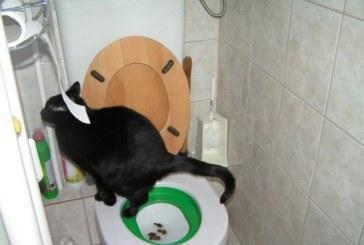 Ezért fogyott el a wc papír