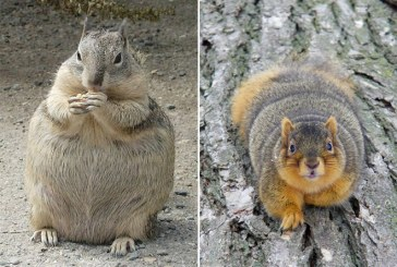 Nézegess cuki mókusokat, akik elhíztak a tél során – Képek