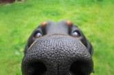 Ezek a cuki kutyák mindenbe beleütik az orrukat – Képek