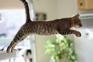 A cicák is tévedhetnek, na! :D