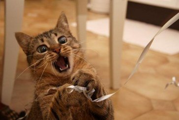 Soha ne szórakozz egy rossz környéken nevelkedett cicával!