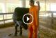 Ha nem látod, nem hiszed el! Állatkertet üzemeltetnek egy floridai börtönben! – Videó