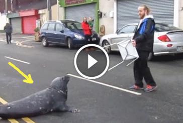 Eszméletlen cuki, ahogy ez a fóka enniavlót kunyerál a halboltban! – Videó