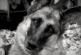 Te nemet tudnál mondani ennek a szupercuki kutyának, aki repetázni szeretne? – Videó