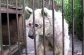 Hihetetlenül megható, ahogy ez a medve 30év után végre kiszabadul! – Videó
