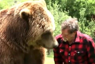 4 hatalmas grizzly medvével él együtt a férfi – Elképesztő felvételek!