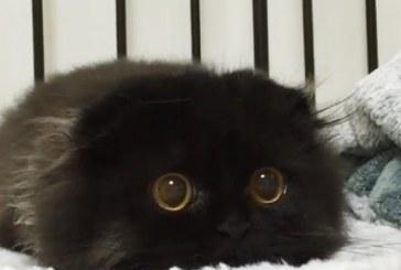 Ez a hatalmas szemű cica az internet új sztárja – Képek